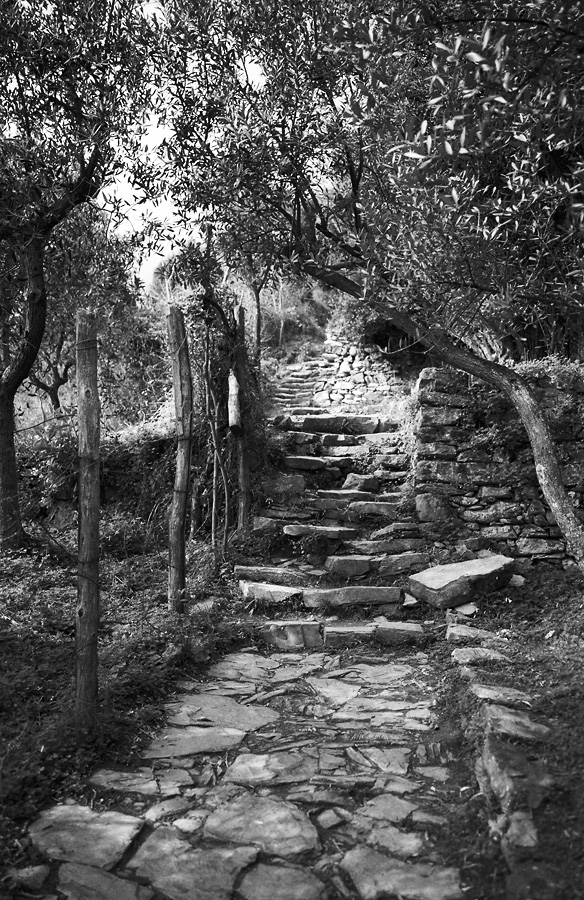 The Path of the Cinque Terre
