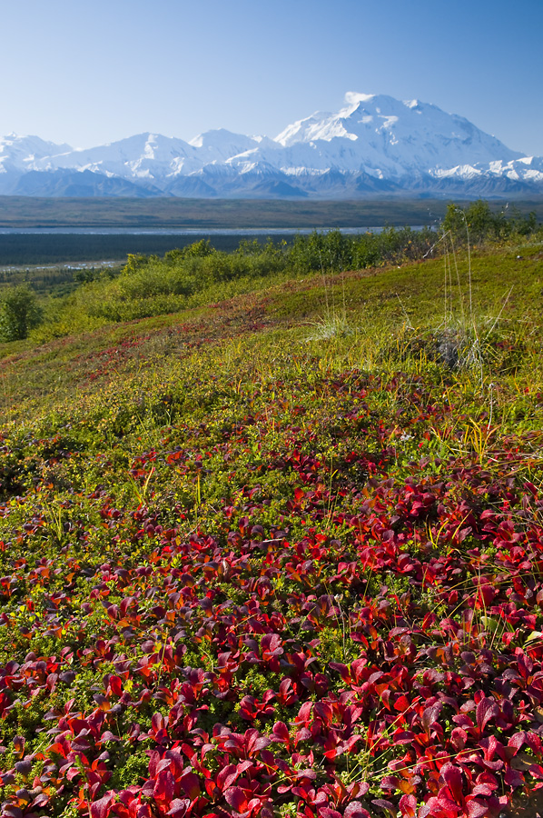 Fall Foilage and Mount McKinley