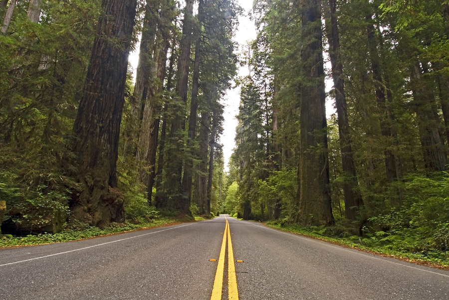The Road Through the Redwoods